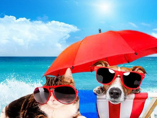 Holidays with your pet Magic Natura Animal, Waterpark Resort Benidorm