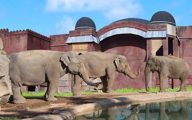 Polynesian elephants observatory magic natura animal, waterpark resort benidorm