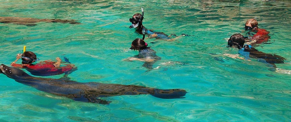 INTERACTION + LIONS DE MER DE SNORKEL Magic Natura Animal, Waterpark Resort Benidorm